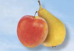 jablonie