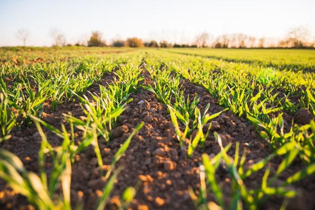 biostyma-nawozy-dla-rolnictwa
