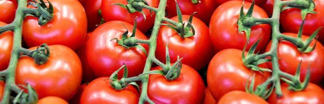 technologie-pomidory-papryki
