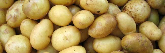 technologie-ziemniaki
